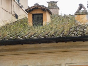Roof vegetation