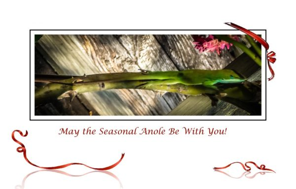 May the Seasonal Anole Be With You!